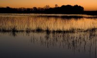Natural sounds from the Canadian Wetlands