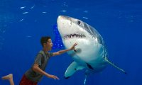 In ocean with shark